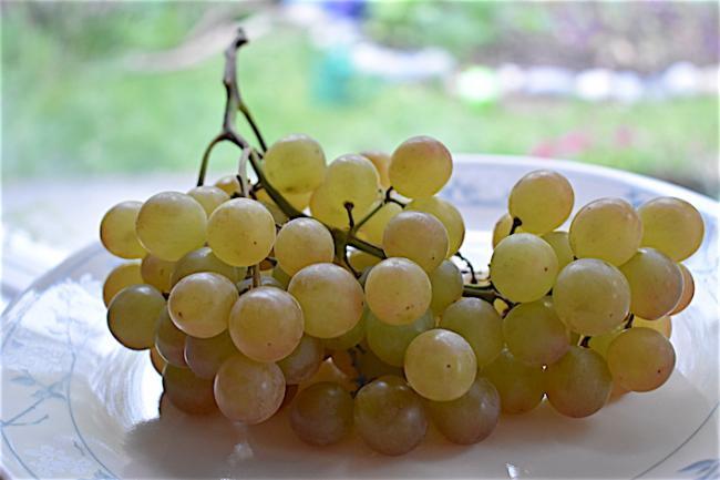 grape02.JPG