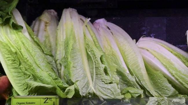 20181121-sg-romaine-lettuce.jpg