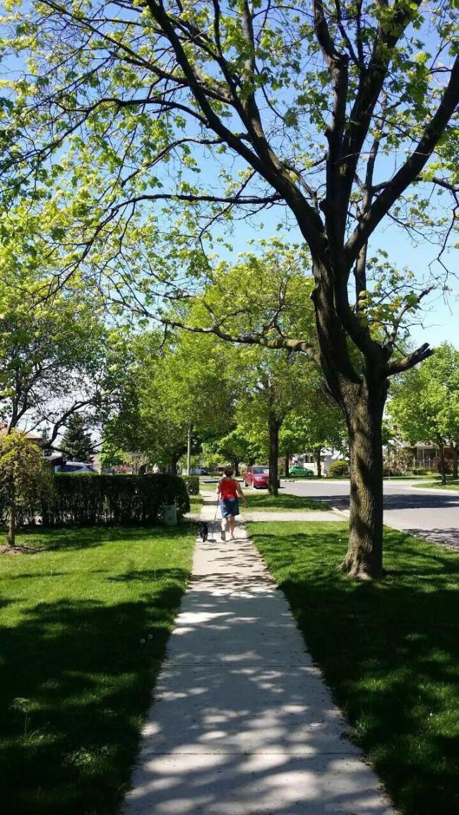 图二:遛遛狗,散散步的午后惬意时光.jpg